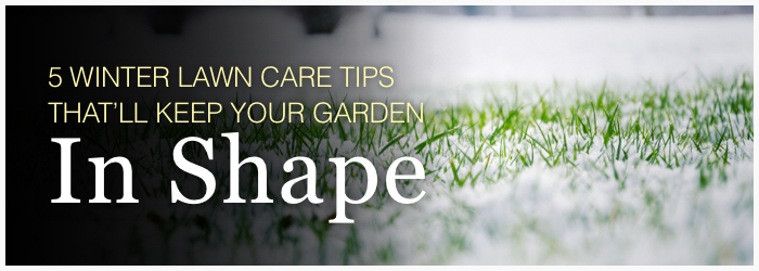 5 Winter Lawn Care Tips That'll Keep Your Garden in Shape